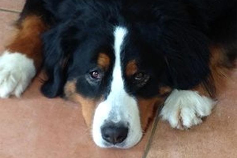 Wachhund Lilly